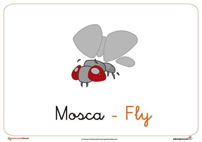 mosca ficha insectos