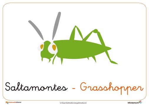 saltamontes ficha insectos