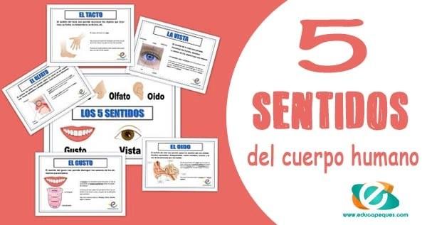 los 5 sentidos, los sentidos, organos de los sentidos para niños para niños