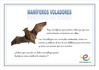 04 Mamiferos voladores