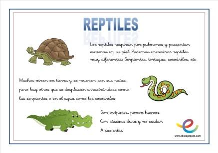 06 Reptiles