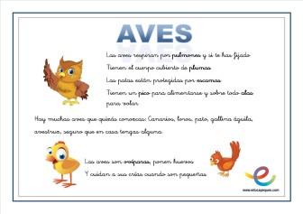08 Aves