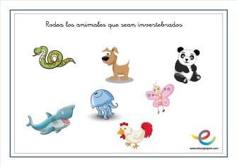Animales invertebrados 01