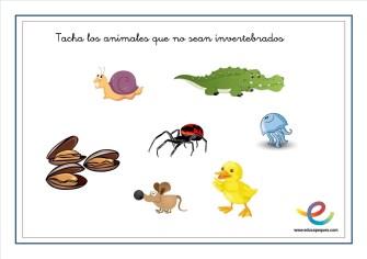 Animales invertebrados 02