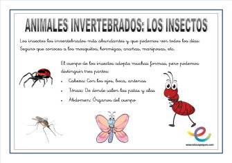 Animales invertebrados 07
