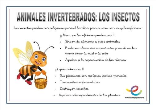 Animales invertebrados 09