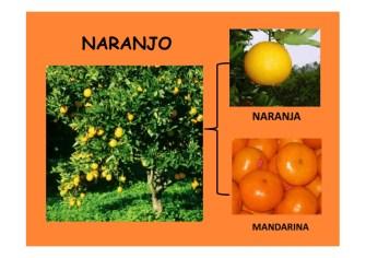 frutos secos y frutas de otoño_018