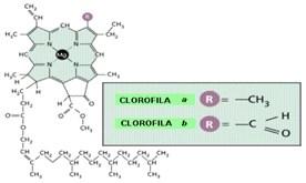 fotosintesis II