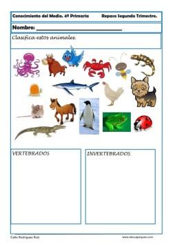 conocimiento del medio para primaria 15