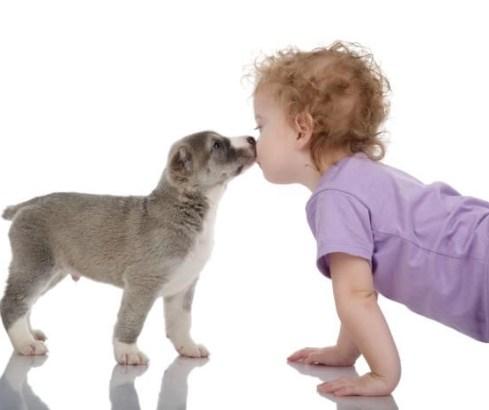 mascotas, animales, educación, escuela de padres