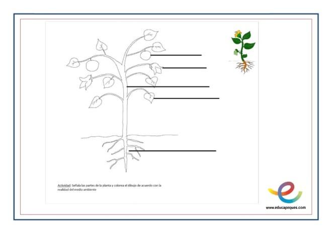 Partes y función de las plantas 1
