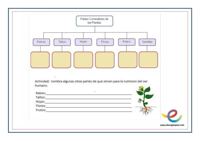 Partes y función de las plantas 6