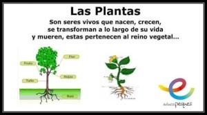 las plantas, partes de la planta