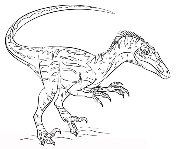 Velociraptor colorear