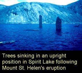 Mt St Helens trees