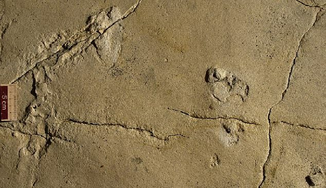 Newly Discovered Human Footprints Undermine Evolutionary Assumptions