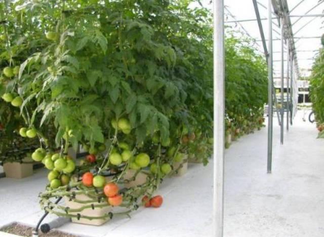 hydroponics farming