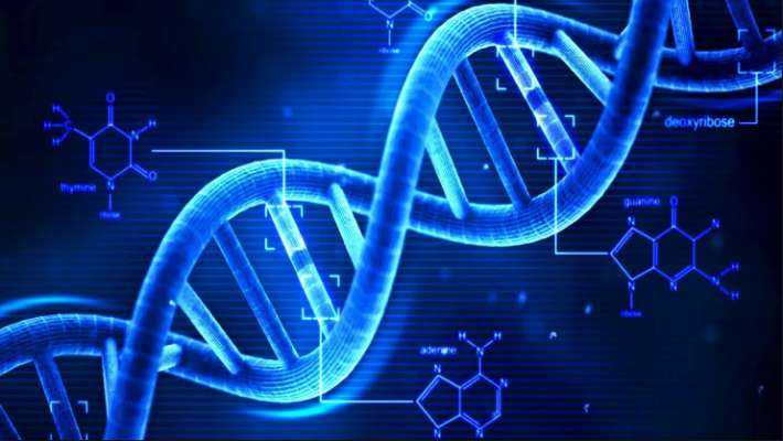What is DNA and why is it so important