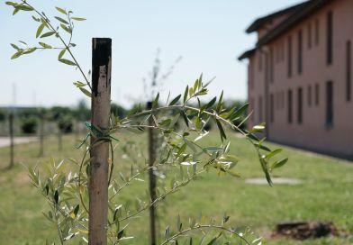 Orto didattico – Residenza Gasparini