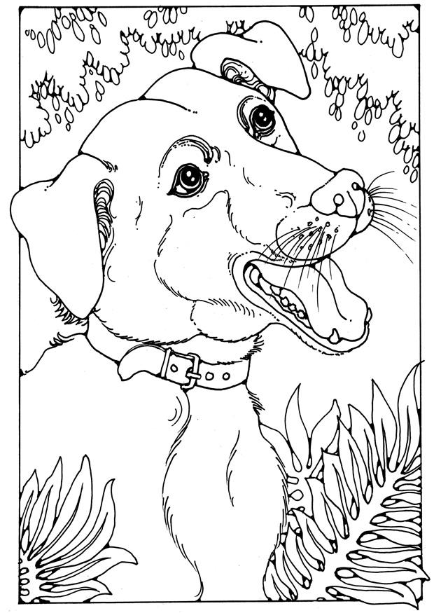 Dibujo Para Colorear Perro Mestizo Img 28200
