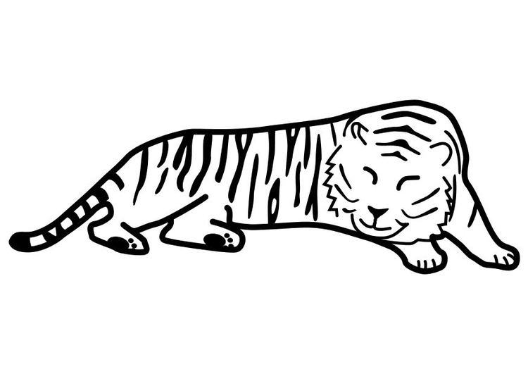Animales Salvajes Tigre Para Dibujar On Log Wall