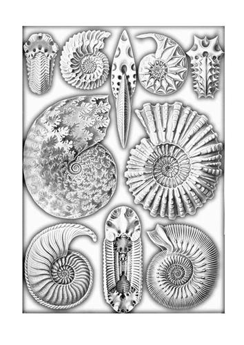 Disegno da colorare fossili