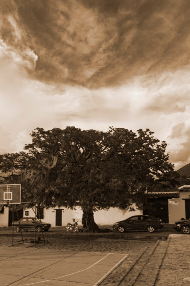 El árbol y el cielo Villa de Leyva, Boyacá, Colombia
