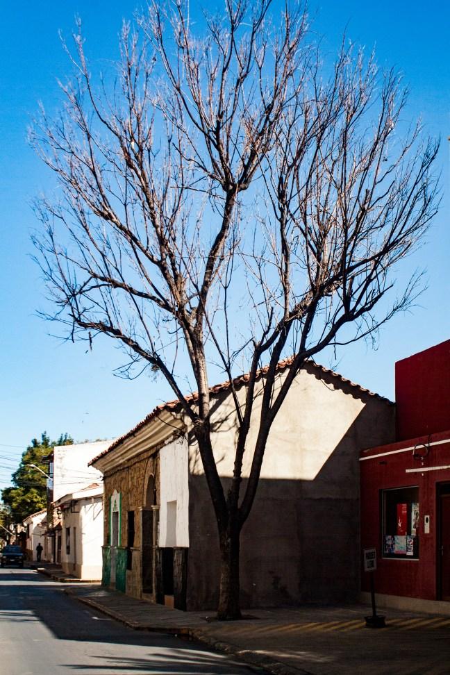 Árbol ciudad de Tarija, Tarija, Bolivia