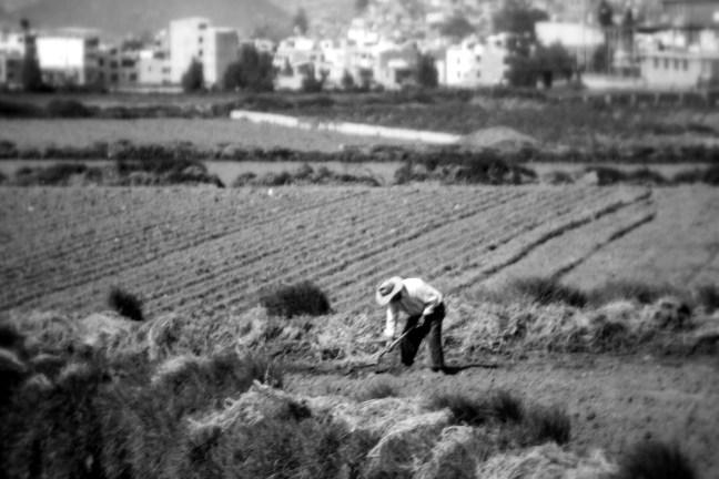 Trabajador de campo CArretera Arequipa a Puno, Perú
