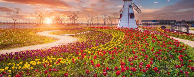 Znalezione obrazy dla zapytania bitcoin tulipomania