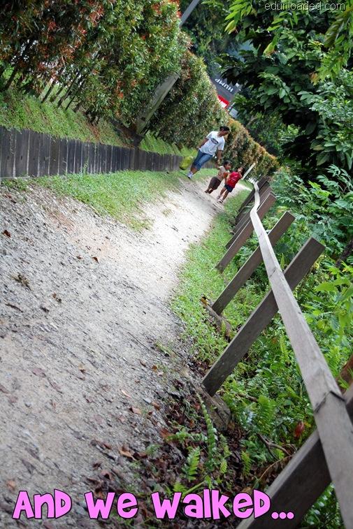 Treetop trail 2