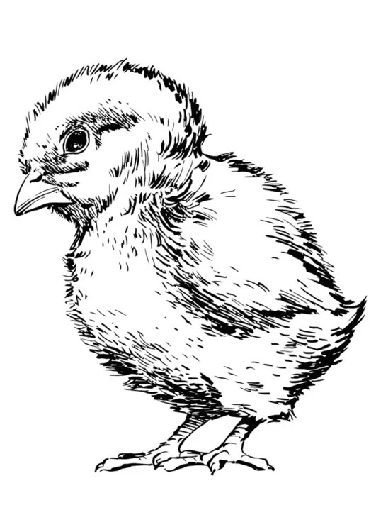 baby chick coloring pages online coloring