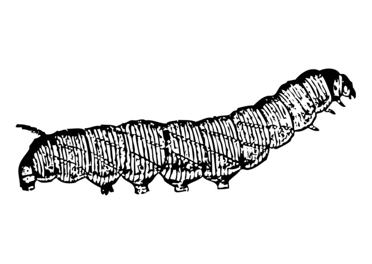 coloring page caterpillar img 19184