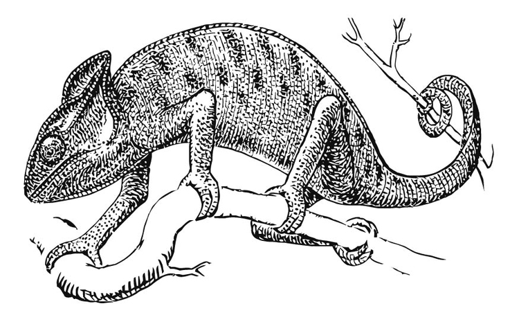 coloring page chameleon img 15741