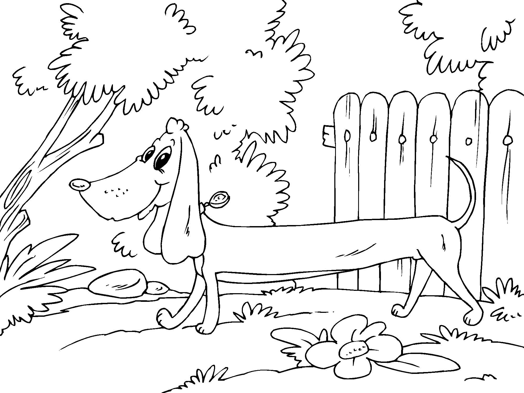 coloring page dachshund img 22681