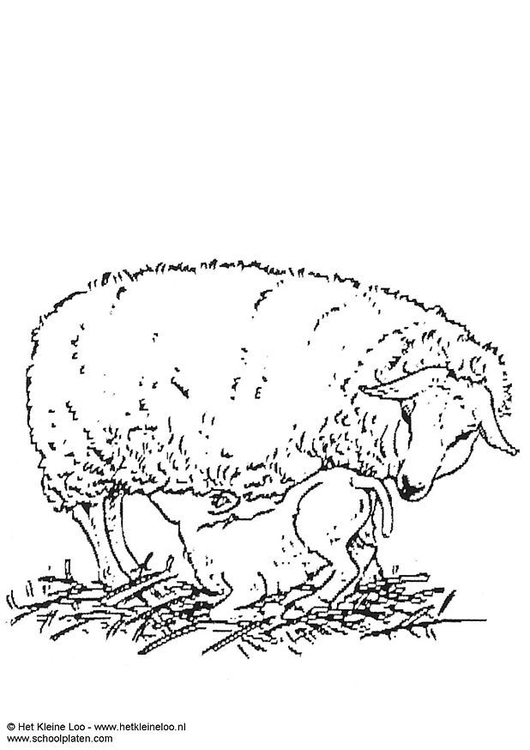 Coloring Page Ewe And Lamb Free Printable Coloring Pages