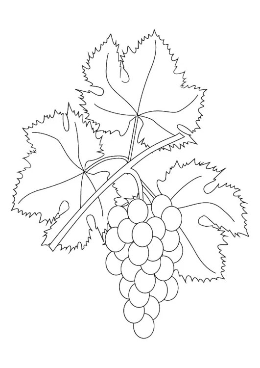 coloring page grapevine img 9876