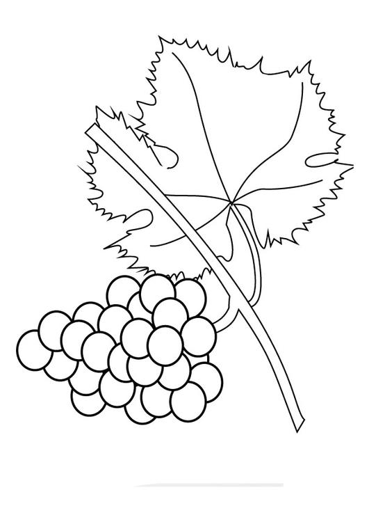 coloring page grapevine img 9857