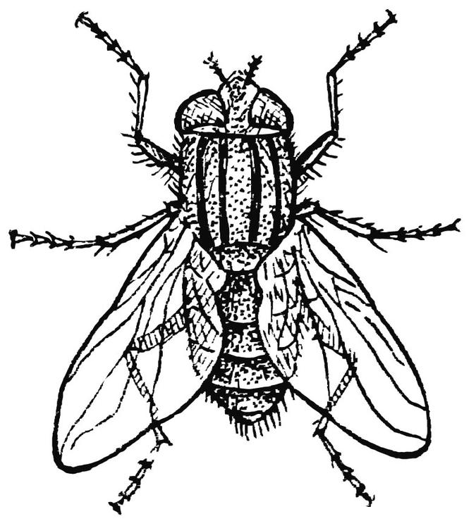 coloring page housefly img 15745