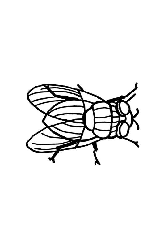 coloring page housefly img 9699