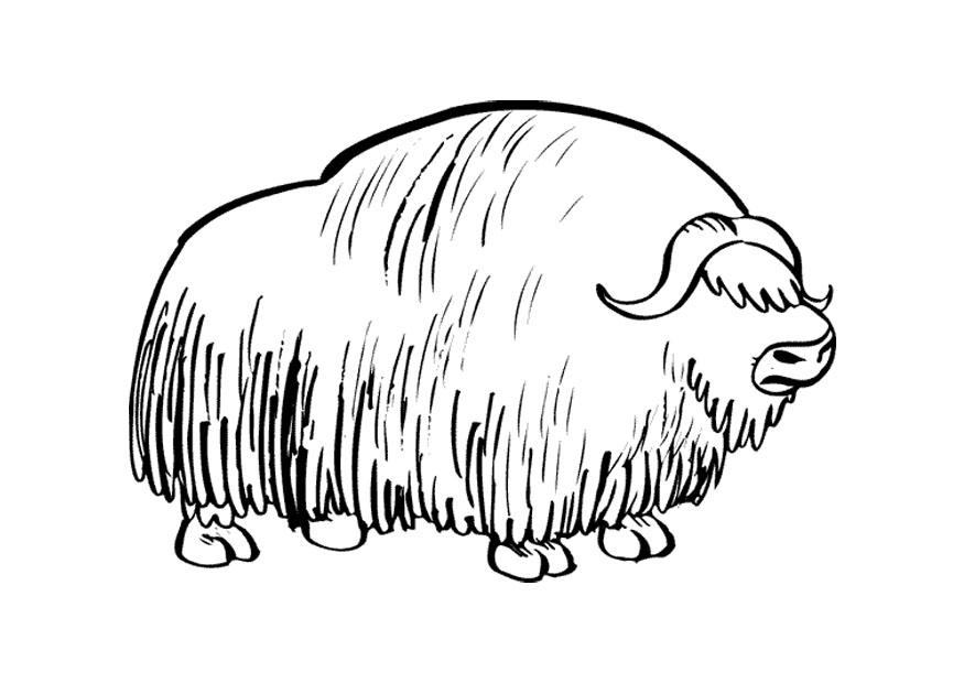 Coloring Page Musk Ox Img 9680