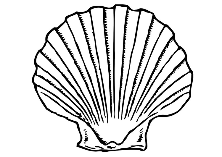 Coloring Page Shell Free Printable Coloring Pages