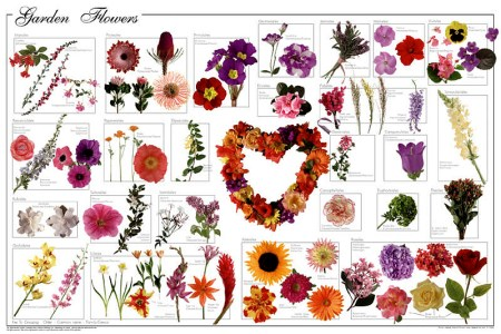 Flower name list with image korean artists 2018 korean artists pretty flowers names images flower decoration ideas dorable beautiful flowers name list images top wedding gowns pretty flower names and pictures choice mightylinksfo