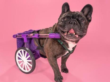 dog wheelchair 3d print
