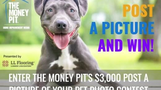 Money Pit's Pet Photo Contest