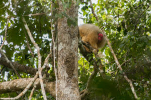 Mamirauá reserve / Brazilië
