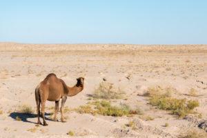 Karakum woestijn / Turkmenistan