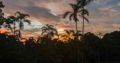 Into the wild : Zonsondergang in de Amazone