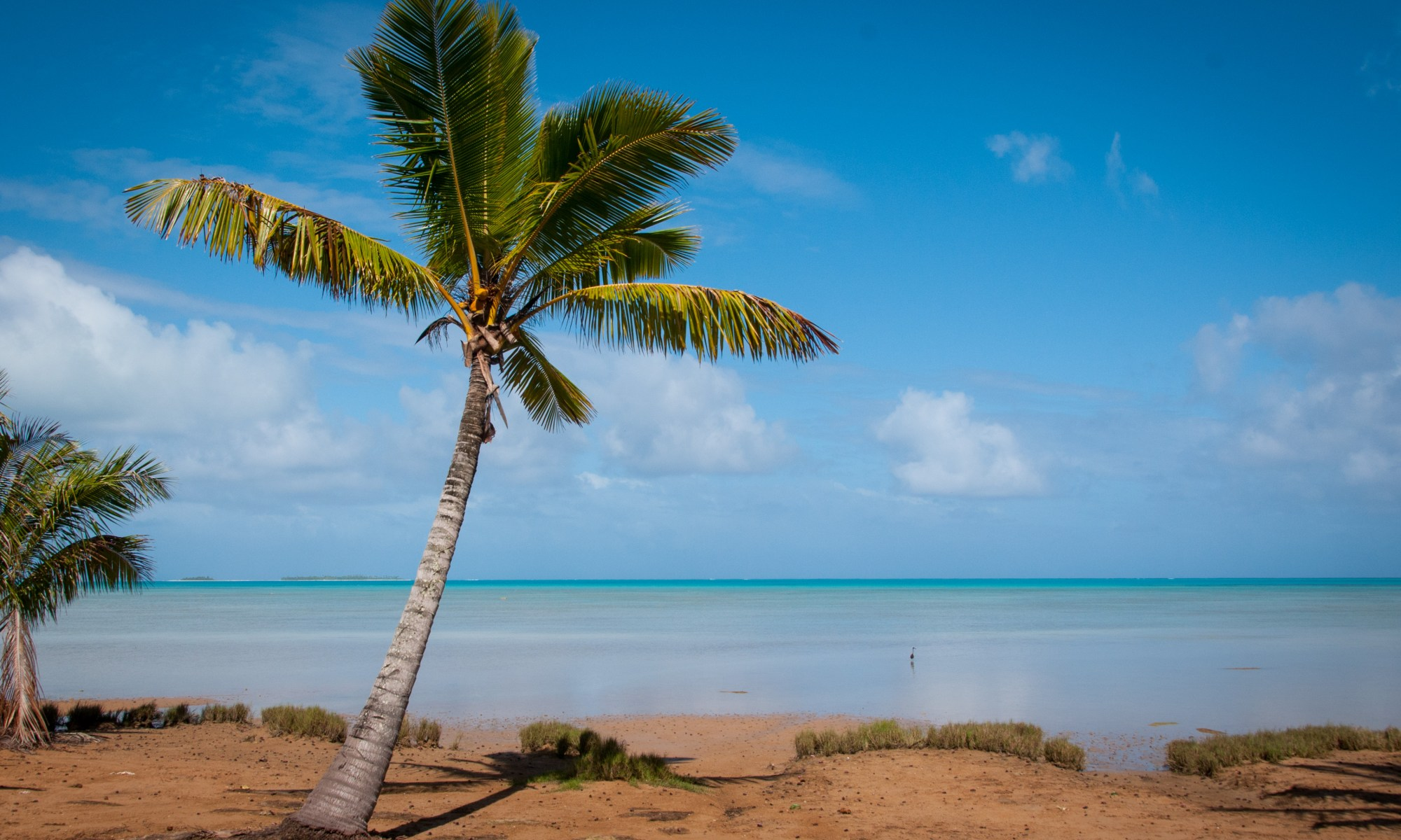 Palm Tree at Aitutaki lagoon, Cook Islands