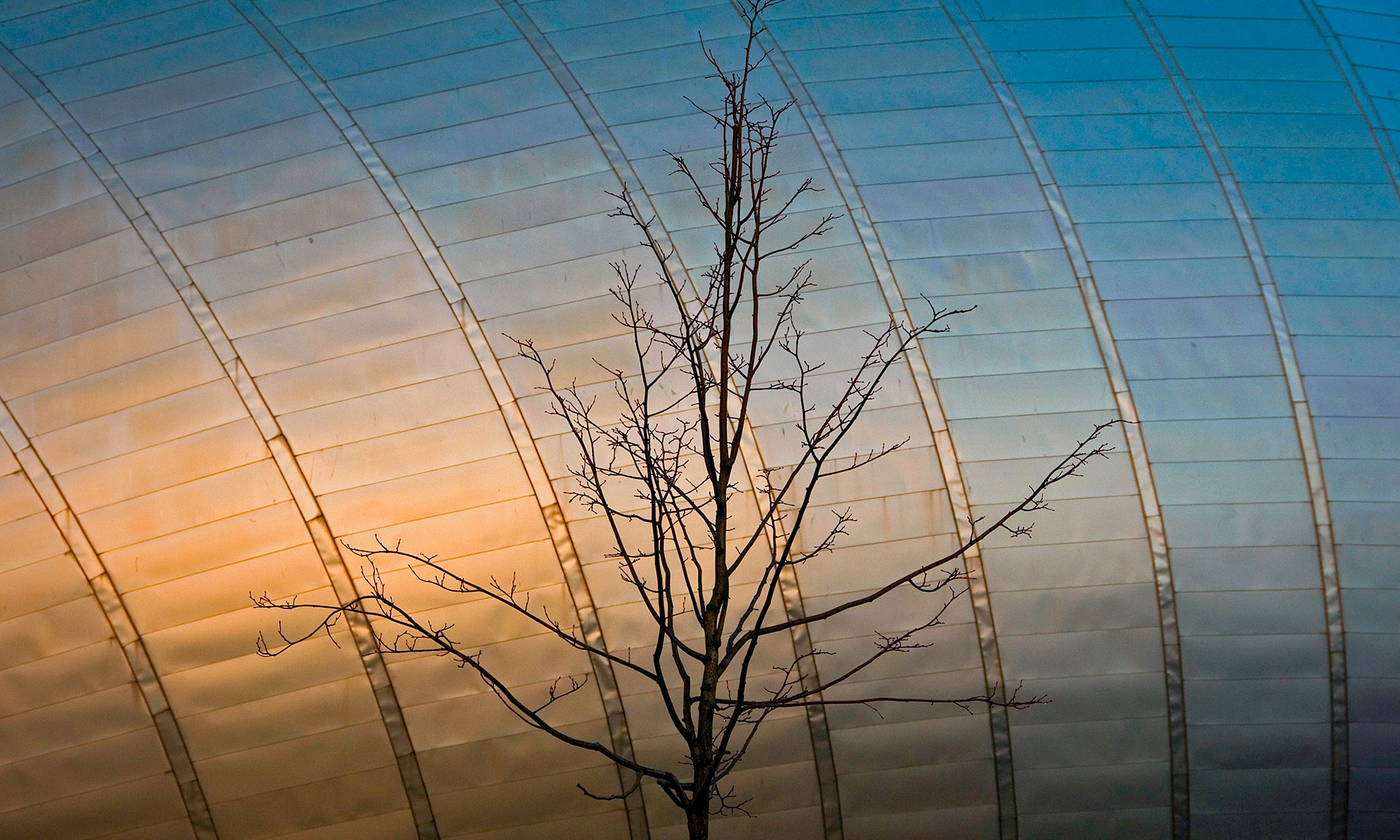 Bare Tree infront of Glasgow iMax